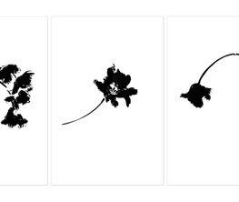 Veronique Gambier | Botanical Studies