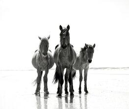 """Anouk Krantz, """"Wild Horses of Cumberland Island"""""""