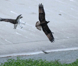 The Wild side of Birds