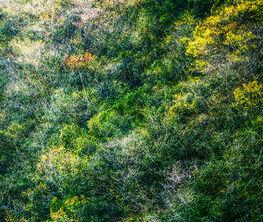 "Yasuo Kiyonaga - ""Woods of Strife"""