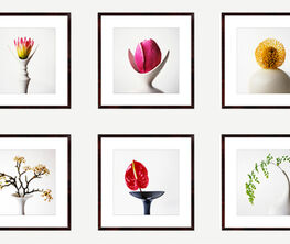 Vivienne Foley - Flower Form Photographs
