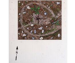 Josephine Halvorson - Five Grounds
