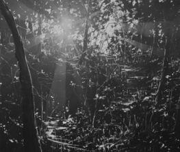 Todd Carpenter // When Dreams Absolve Daylight