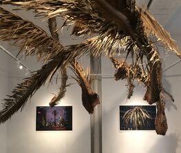 Joanna Rajkowska. Death of The Palm