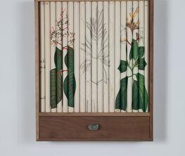 Santiago Montoya - Quinine Dissecting Series