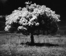 Wild Trees by Nicolas Auvray