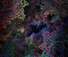 Illuminated Dendrology - by Linda Westin