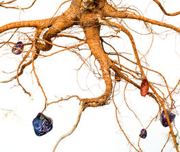 Jesse Krimes: Strange Roots