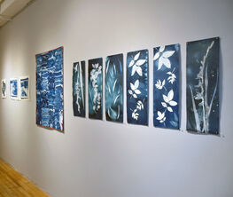On the Wall: Cyanotypes
