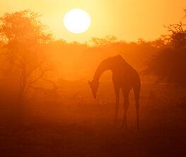 African Wildlife by Richard Bernabe