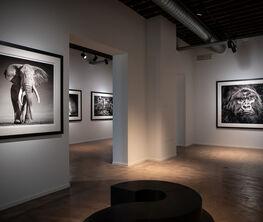 David Yarrow Exhibition by Leonhard's Gallery X Artsy
