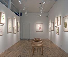 Contemporary Works by The New York Botanical Garden's Botanical Art & Illustration Program