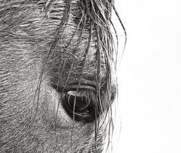 "Anouk Krantz, ""Wild Horses of Cumberland Island"" -Fritz Porter, Charleston, SC"