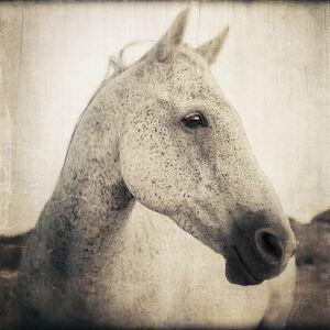 Thomas Hager, 'Horse Portrait - 1, 1/10', 2016
