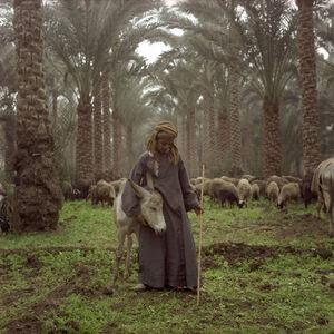 Denis Dailleux, 'Jeune berger à Sakkara', 1996