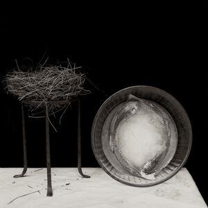 Zoë Zimmerman, 'Fishnest-bowl', 2007