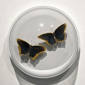 Esther Traugot, 'black and blue pair of butterflies', 2019