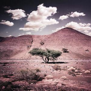 Bernhard Quade, 'Morocco Tree Anti Atlas', 2011