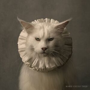 Marie Cecile Thijs, 'Cat with White Collar VII', 2017