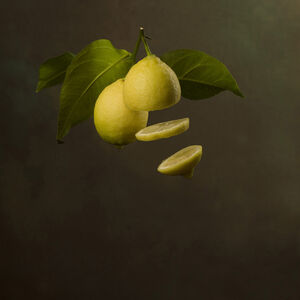 Marie Cecile Thijs, ' Flying Citrus ', 2017