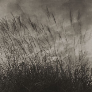 Takeshi Shikama, 'Evanescence - Field: Field #14', 2008
