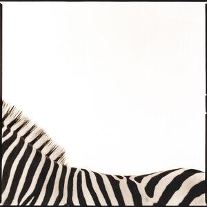Nine Francois, 'Zebra I'