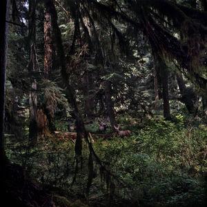 Jason Frank Rothenberg, 'Moose', 2014