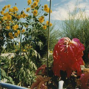 Mikiko Hara, 'Untitled ', 2001