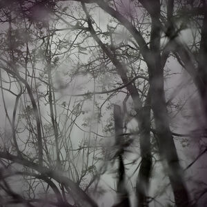 CANDELARIA MAGLIANO, 'Arbor I', 2019