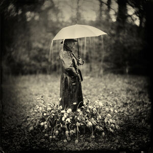 Alex Timmermans, 'Tears for Tulips', 2016