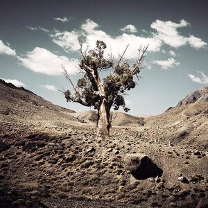 Bernhard Quade, 'Morocco Monument Tree', 2011