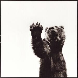 Nine Francois, 'Grizzly Bear'