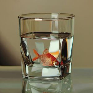 Young-Sung Kim, 'Nothing.Life.Object (Fish in Glass)', 2015
