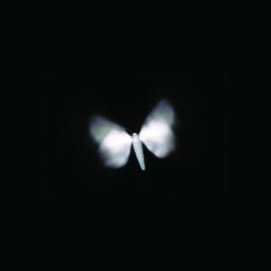 Teresa Cunniff, 'Ground Luminosity', 2009