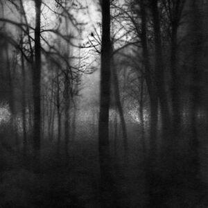 Carla Shapiro, 'The Blush Shadows of Early Morning', 2017
