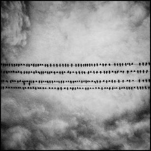 Matt Black, 'Birds. Tulare, California.', 2014