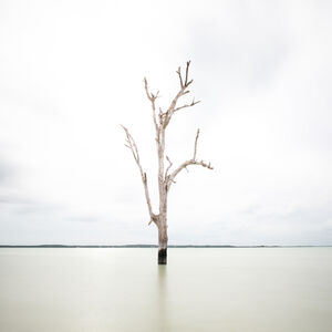 Keith Ramsdell, 'Tall Tree at Harbour Island'