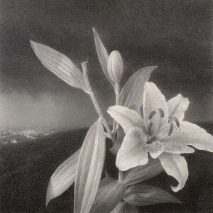 Lewis Chamberlain, 'The lily', 2020