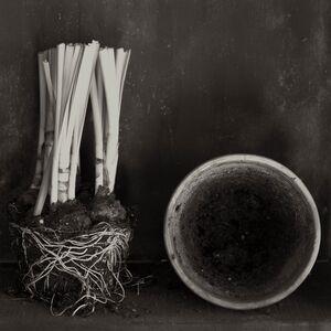 Zoë Zimmerman, 'Narcissus Aging', 2006