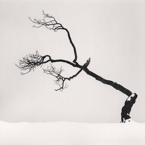 Michael Kenna, 'Kussharo Lake Tree, Study 6, Kotan, Hokkaido, Japan.', 2007