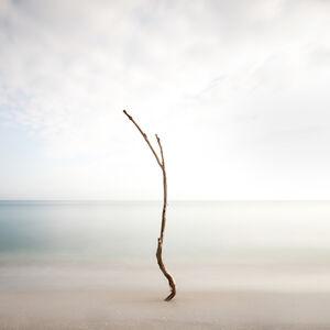 Keith Ramsdell, 'Minimal Tree at Jupiter Island'
