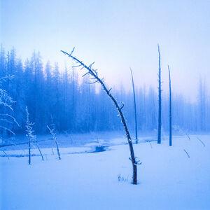 LUCA MARZIALE, 'FROZEN TREE ON TWILIGHT'