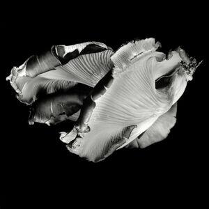 Dale M. Reid, 'Oyster Mushroom no.36', 2016