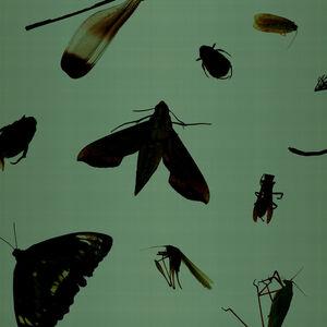 DIN-YEH WANG, '召喚最終的美麗V', 2011