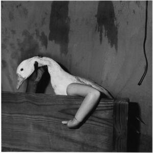 Roger Ballen, 'One Arm Goose', 2004