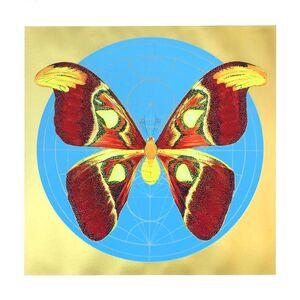 Jessica Albarn, 'Atlas Moth (Light Blue)', 2020