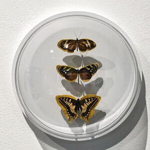 Esther Traugot, 'Brown Gold three butterflies', 2019