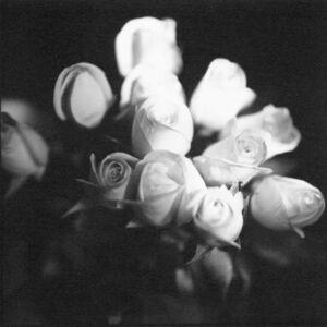 Bruce Cratsley, '12 Roses', 1994