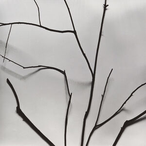 Chu Chu  儲楚, 'Whispers of Trees-Diospyros', 2011-2017