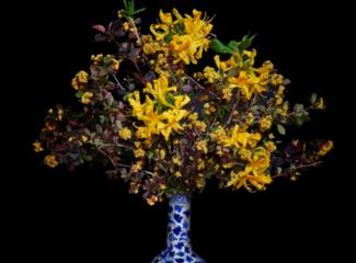T.M. Glass, on 'Plantasia'